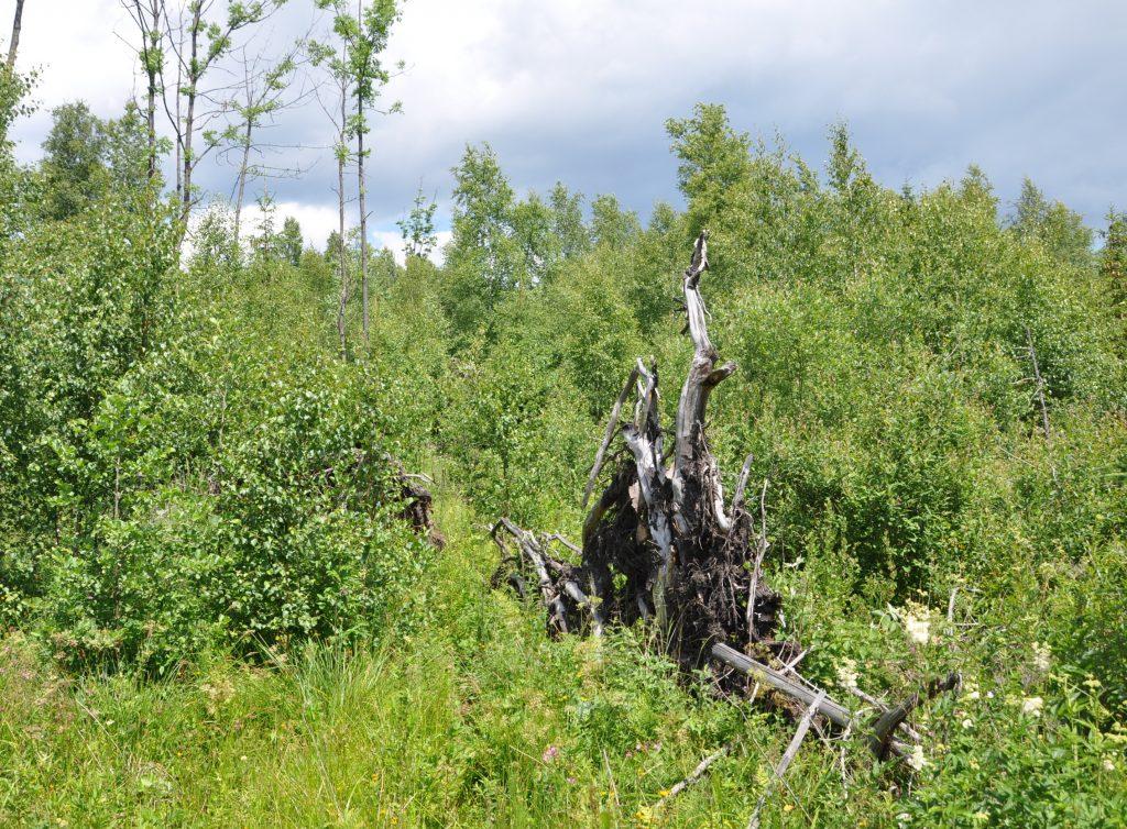tatranský les