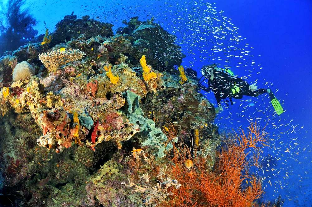 Koraly Komory Moheli