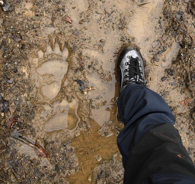 medvedie stopy